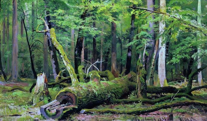 Защита от колдовства с деревом и нитками. Мотанка. Авт. Норфет. 83290-srublennyy-dub-v-belovezhskoy-pushche-shishkin-ivan