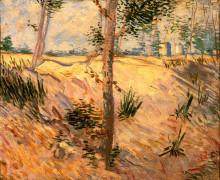 """Копия картины """"trees in a field on a sunny day"""" художника """"ван гог винсент"""""""