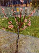 "Репродукция картины ""Almond Tree in Blossom"" художника ""Ван Гог Винсент"""