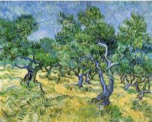 "Картина ""Olive Grove"" художника ""Ван Гог Винсент"""