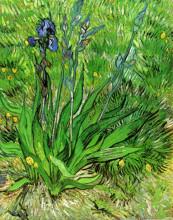 """Репродукция картины """"the iris"""" художника """"ван гог винсент"""""""