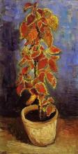 """Копия картины """"Coleus Plant in a Flowerpot"""" художника """"Ван Гог Винсент"""""""