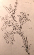 """Копия картины """"Drawing of lilies, for an Annunciation"""" художника """"да Винчи Леонардо"""""""