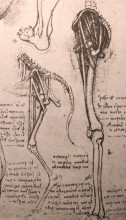 "Копия картины ""Drawing of the comparative anatomy of the legs of a man and a dog"" художника ""да Винчи Леонардо"""