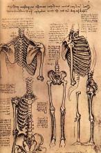 """Копия картины """"Drawing of the Torso and the Arms"""" художника """"да Винчи Леонардо"""""""