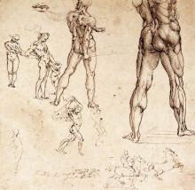 "Репродукция картины ""Anatomical studies"" художника ""да Винчи Леонардо"""
