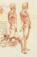 """Копия картины """"The anatomy of a male nude and a battle scene"""" художника """"да Винчи Леонардо"""""""