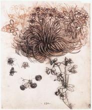 "Картина ""stof bethlehem and other plants"" художника ""да винчи леонардо"""