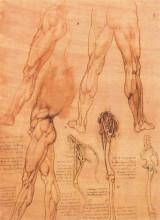 """Репродукция картины """"Studies of legs of man and the leg of a horse"""" художника """"да Винчи Леонардо"""""""
