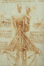 "Картина ""Anatomy of the Neck"" художника ""да Винчи Леонардо"""