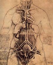 """Репродукция картины """"drawing of a woman's torso"""" художника """"да винчи леонардо"""""""