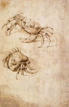 """Репродукция картины """"Studies of crabs"""" художника """"да Винчи Леонардо"""""""