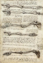 "Картина ""Studies of the Arm showing the Movements made by the Biceps"" художника ""да Винчи Леонардо"""