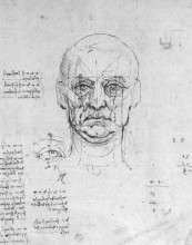"Репродукция картины ""Study on the proportions of head and eyes"" художника ""да Винчи Леонардо"""