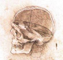 """Репродукция картины """"View of a Skull"""" художника """"да Винчи Леонардо"""""""