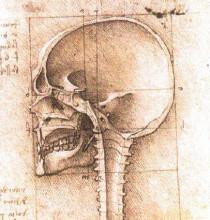 "Копия картины ""View of a Skull"" художника ""да Винчи Леонардо"""