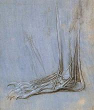 "Репродукция картины ""The anatomy of a foot"" художника ""да Винчи Леонардо"""