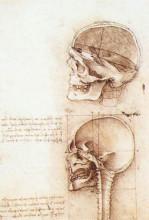 "Копия картины ""Studies of human skull"" художника ""да Винчи Леонардо"""