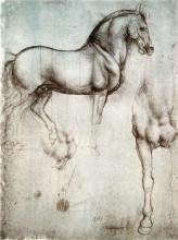 "Репродукция картины ""Study of horses"" художника ""да Винчи Леонардо"""