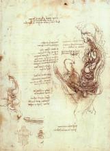 """Копия картины """"studies of the sexual act and male sexual organ"""" художника """"да винчи леонардо"""""""