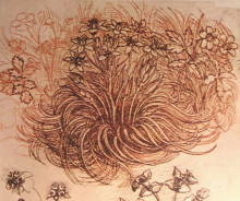 "Картина ""Drawing of a botanical study"" художника ""да Винчи Леонардо"""