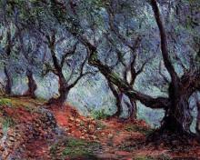 """Картина """"группа оливковых деревьев в бордигере"""" художника """"моне клод"""""""