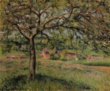 "Копия картины ""Apple Tree at Eragny"" художника ""Писсарро Камиль"""