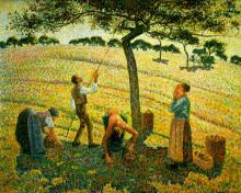 """Картина """"apple picking at eragny-sur-epte"""" художника """"писсарро камиль"""""""