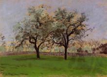 """Картина """"Apples Trees at Pontoise"""" художника """"Писсарро Камиль"""""""