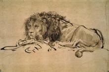 """Копия картины """"lion resting"""" художника """"рембрандт"""""""