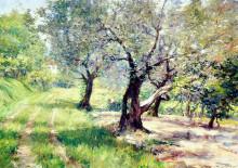 "Картина ""The Olive Grove"" художника ""Чейз Уильям Меррит"""
